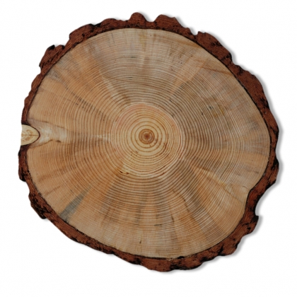 Charger Plate -  Wood Log Slice